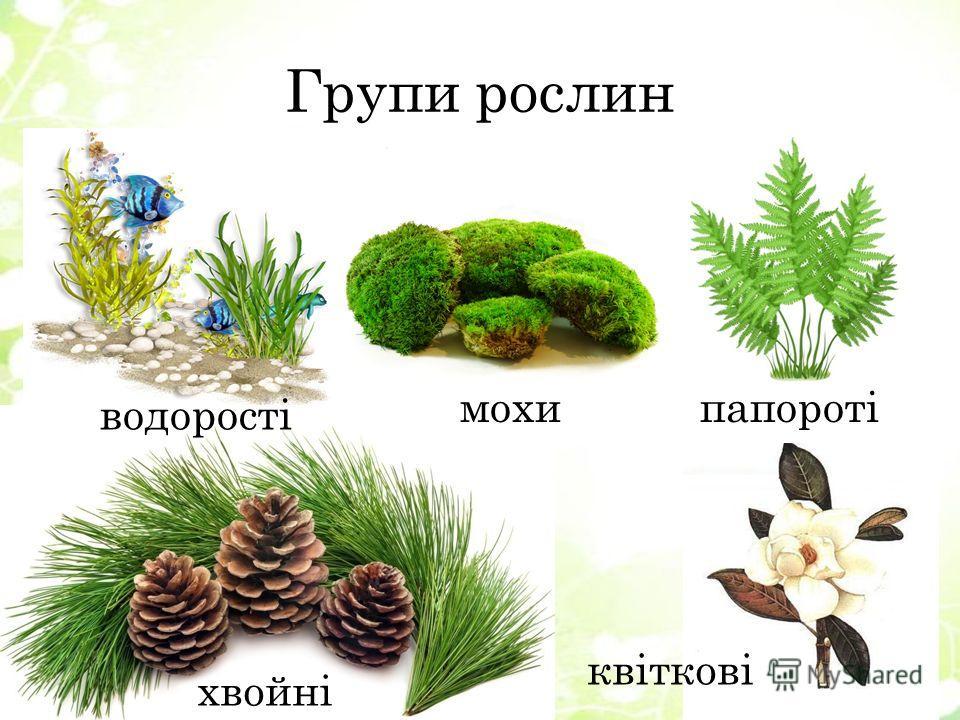 Групи рослин водорості махипапороті хвойні квіткові