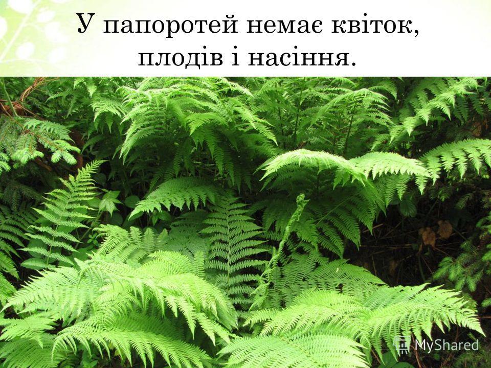 У папоротей немає квіток, плодів і насіння.