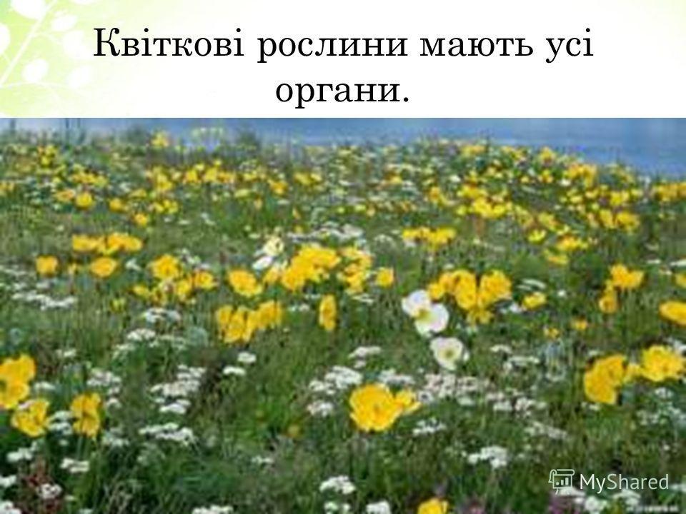 Квіткові рослини мають усі органы.