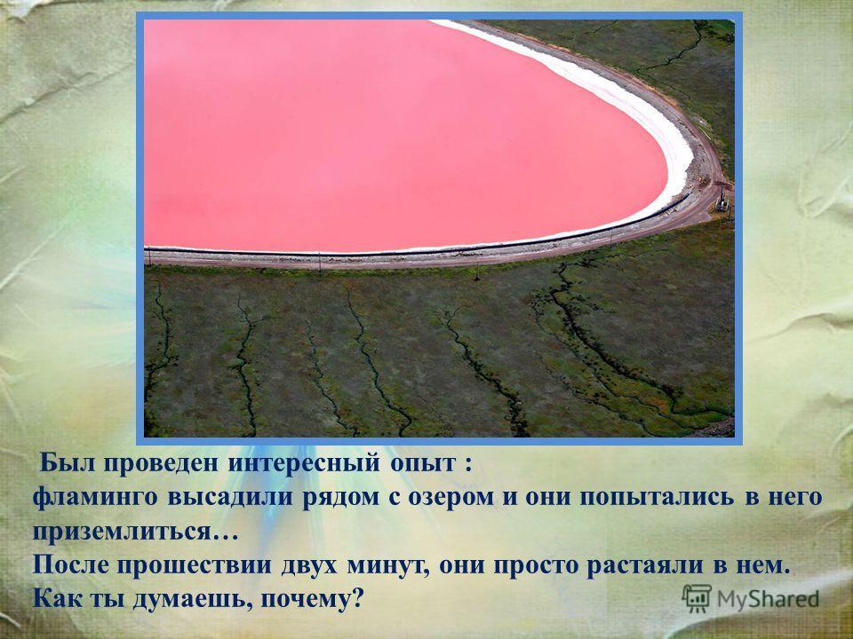 Был проведен интересный опыт : фламинго высадили рядом с озером и они попытались в него приземлиться… После прошествии двух минут, они просто растаяли в нем. Как ты думаешь, почему?