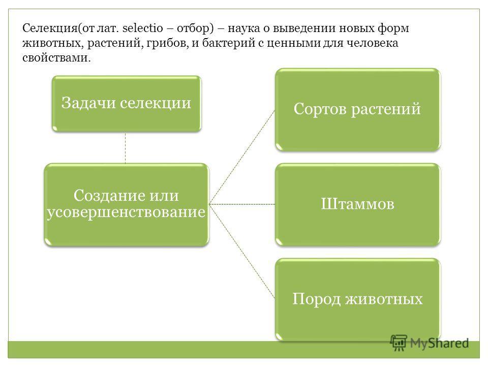Селекция(от лат. selectio – отбор) – наука о выведении новых форм животных, растений, грибов, и бактерий с ценными для человека свойствами. Задачи селекции Создание или усовершенствование Сортов растений ШтаммовПород животных