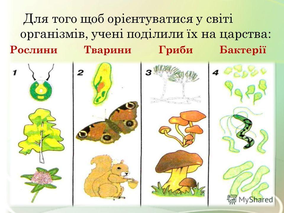 Для того щоб орієнтуватися у світі організмів, учені поділили їх на царства: Рослини Тварини Гриби Бактерії