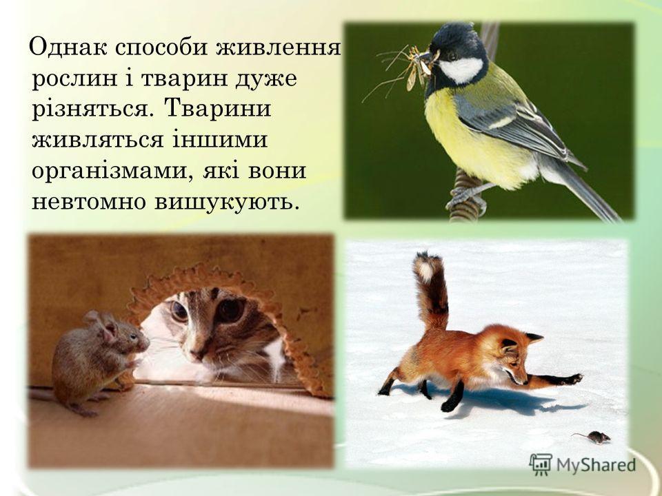 Однак способи живлення рослин і тварин даже різняться. Тварини живляться іншими організмами, які вони невтомно вишукують.