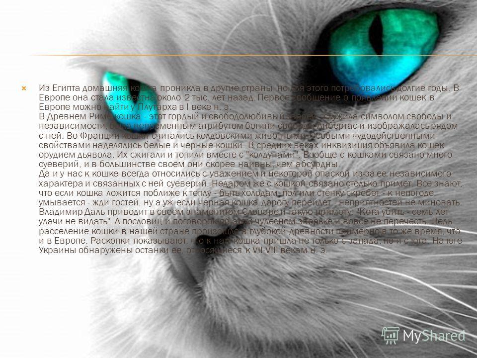 Из Египта домашняя кошка проникла в другие страны, но для этого потребовались долгие годы. В Европе она стала известна около 2 тыс. лет назад. Первое сообщение о появлении кошек в Европе можно найти у Плутарха в I веке н. э. В Древнем Риме кошка - эт