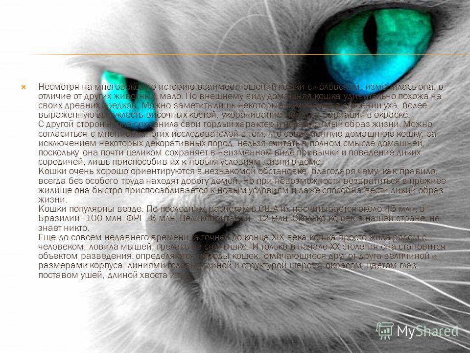 Несмотря на многовековую историю взаимоотношений кошки с человеком, изменилась она, в отличие от других животных, мало. По внешнему виду домашняя кошка удивительно похожа на своих древних предков. Можно заметить лишь некоторые изменения в строении ух