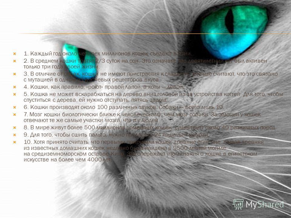 1. Каждый год около четырех миллионов кошек съедают в Азии. 2. В среднем кошки тратят 2/3 суток на сон. Это означает, что девятилетний кот был активен только три года своей жизни. 3. В отличие от собак, кошки не имеют пристрастия к сладкому. Ученые с