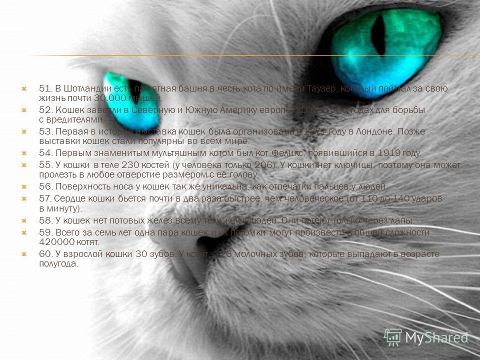 51. В Шотландии есть памятная башня в честь кота по имени Таузер, который поймал за свою жизнь почти 30.000 мышей. 52. Кошек завезли в Северную и Южную Америку европейцы в 1750-х годах для борьбы с вредителями. 53. Первая в истории выставка кошек был