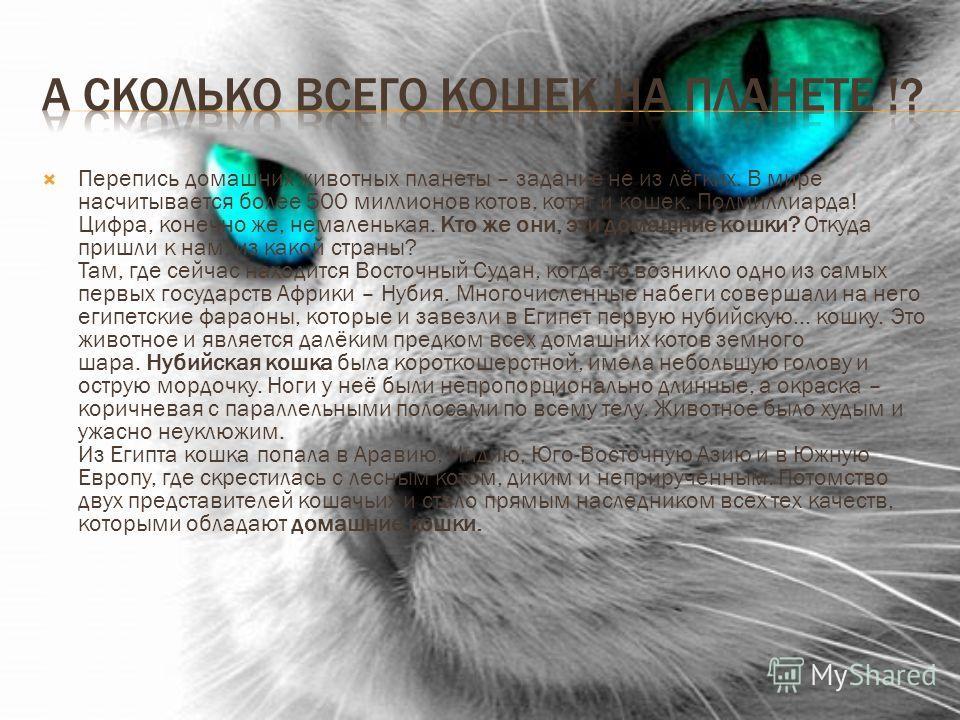 Перепись домашних животных планеты – задание не из лёгких. В мире насчитывается более 500 миллионов котов, котят и кошек. Полмиллиарда! Цифра, конечно же, немаленькая. Кто же они, эти домашние кошки? Откуда пришли к нам, из какой страны? Там, где сей