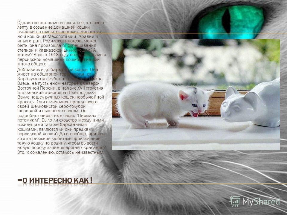 Однако позже стало выясняться, что свою лепту в создание домашней кошки вложили не только египетские животные, но и кошки из Месопотамии, Аравии и иных стран. Родилась гипотеза: может быть, она произошла от скрещивания степной и кавказской диких коше