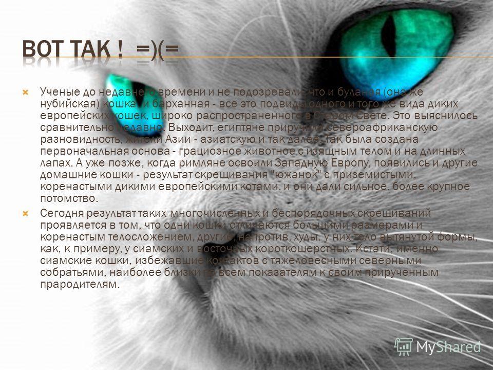 Ученые до недавнего времени и не подозревали, что и буланая (она же нубийская) кошка, и барханная - все это подвиды одного и того же вида диких европейских кошек, широко распространенного в Старом Свете. Это выяснилось сравнительно недавно. Выходит,