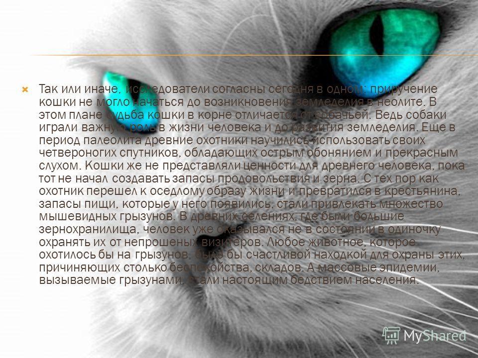 Так или иначе, исследователи согласны сегодня в одном: приручение кошки не могло начаться до возникновения земледелия в неолите. В этом плане судьба кошки в корне отличается от собачьей. Ведь собаки играли важную роль в жизни человека и до развития з