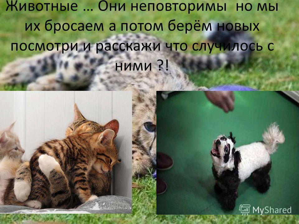 Животные … Они неповторимы но мы их бросаем а потом берём новых посмотри и расскажи что случилось с ними ?!