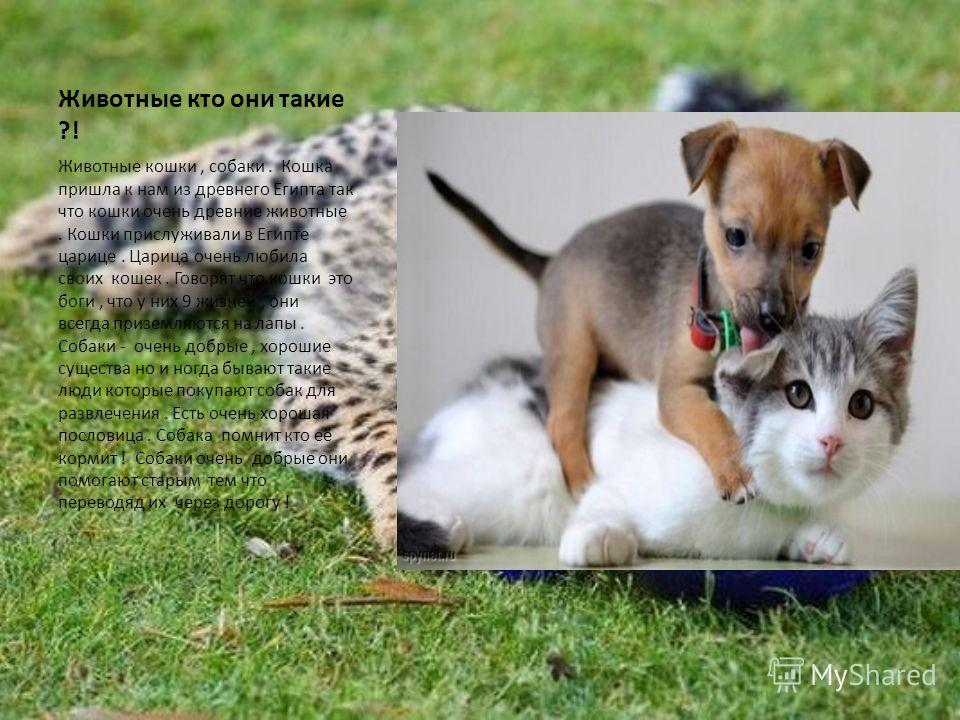 Животные кто они такие ?! Животные кошки, собаки. Кошка пришла к нам из древнего Египта так что кошки очень древние животные. Кошки прислуживали в Египте царице. Царица очень любила своих кошек. Говорят что кошки это боги, что у них 9 жизней, они все