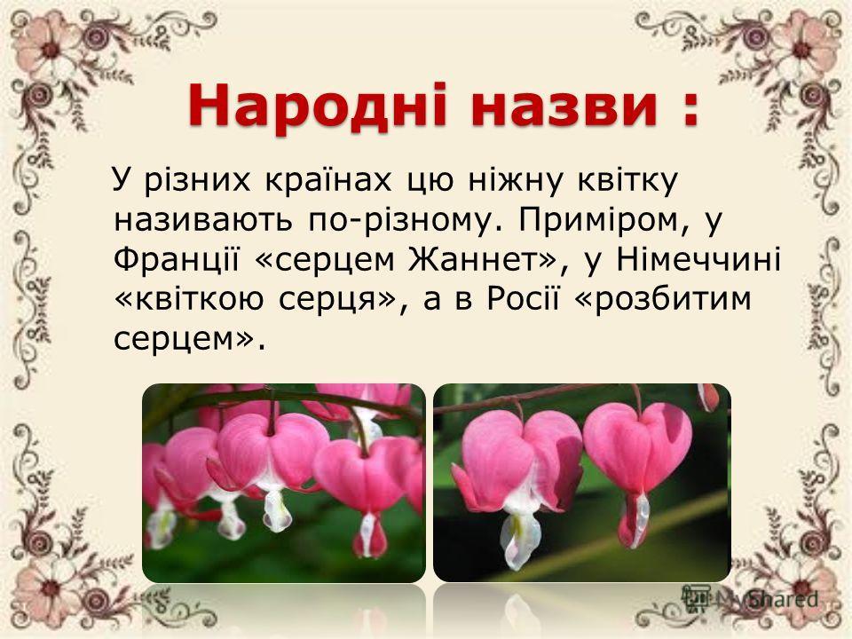 Народні назви : У різних країнах цю ніжну квітку називають по-різному. Приміром, у Франції «сердцем Жаннет», у Німеччині «квіткою серце», а в Росії «розбитим сердцем».