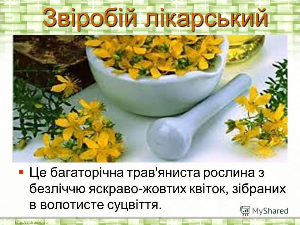 Це багаторічна трав'яниста рослина з безліччю яскраво-жовтих квіток, зібраних в волотисте суцвіття. Це багаторічна трав'яниста рослина з безліччю яскраво-жовтих квіток, зібраних в волотисте суцвіття. Звіробій лікарський