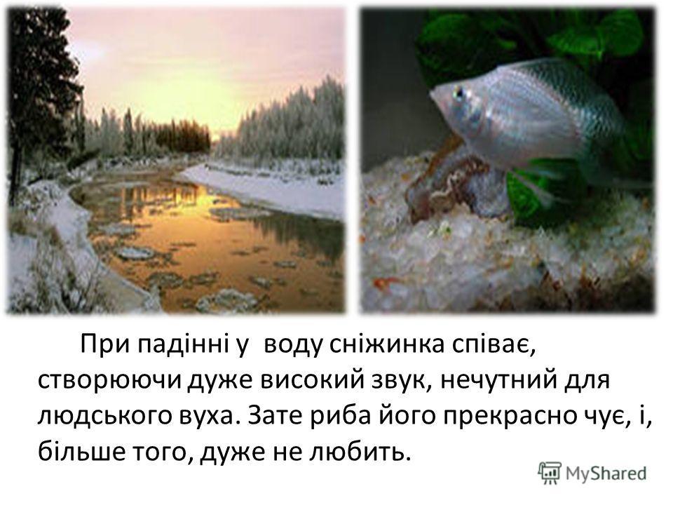 При падінні у воду сніжинка співає, створюючи даже высокий звук, нечутний для людського вуза. Зате рыба його прекрасно чує, і, більше того, даже не любить.