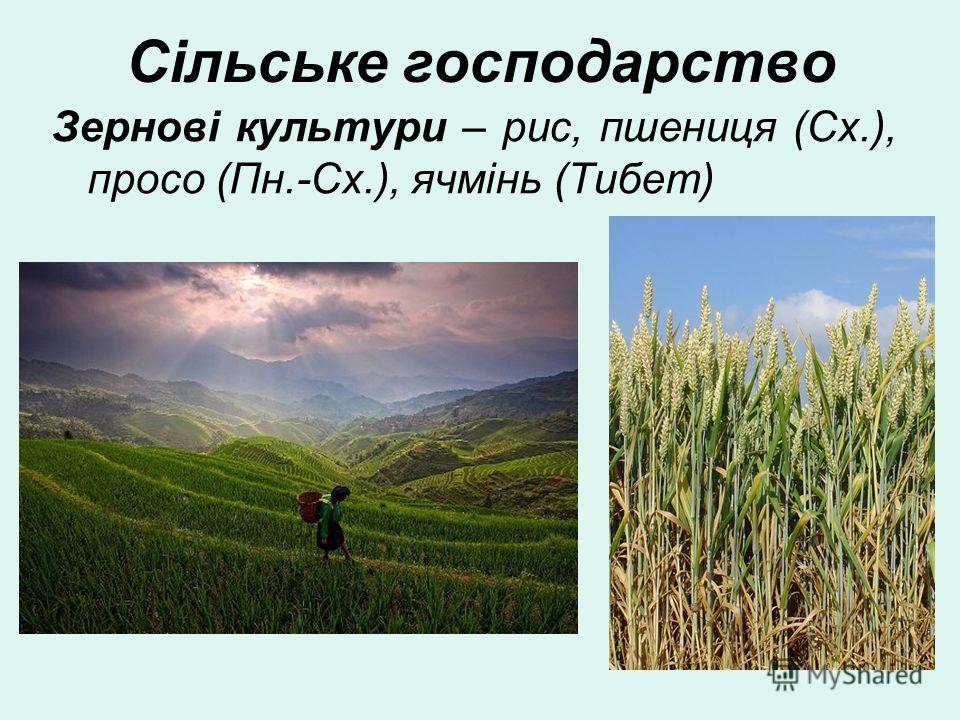 Сільське господарство Зернові культури – рис, пшеница (Сх.), просо (Пн.-Сх.), ячмінь (Тибет)