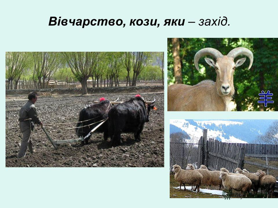 Вівчарство, козы, яки – захід.
