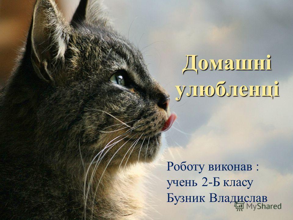 Домашні улюбленці Роботу виконав : очень 2-Б класу Бузник Владислав