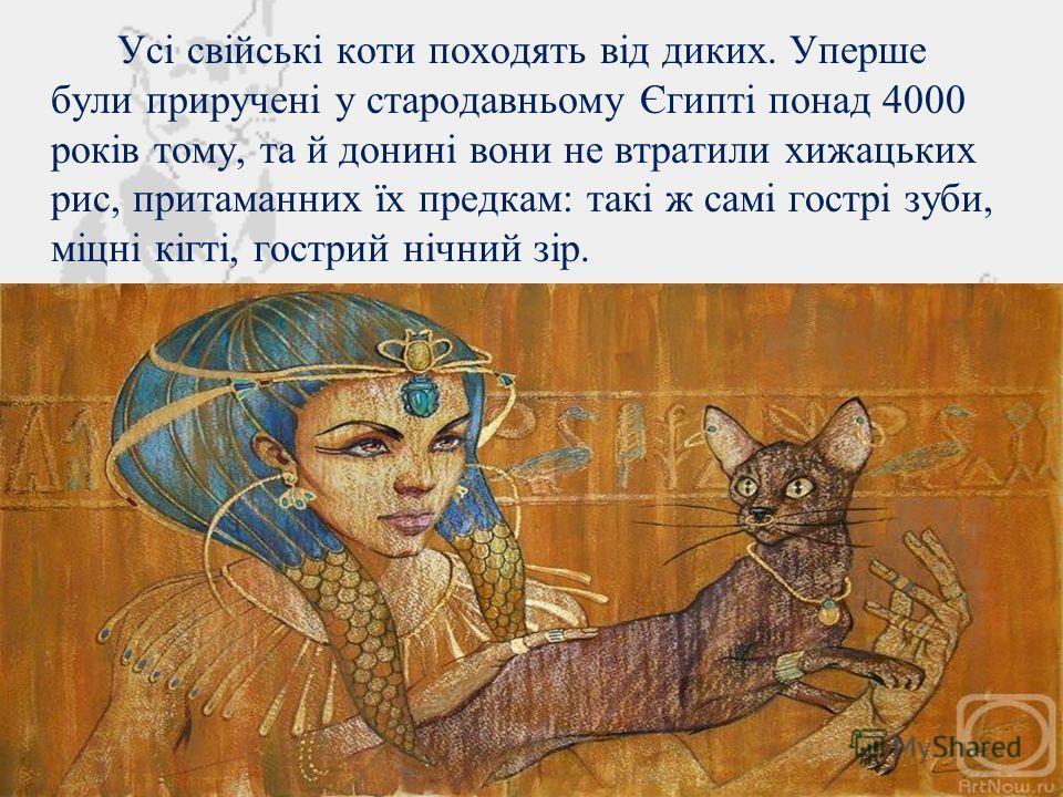 Усі свійські коти походять від диких. Уперше були приручені у стародавньому Єгипті по-над 4000 років тому, та й донині вони не втратили хижацьких рис, притаманних їх предкам: такі ж самі гострі зубы, міцні кігті, гострий нічний зір.