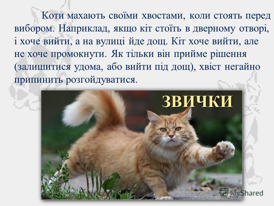 Коти махають своїми хвостами, коли стоять перед выбором. Наприклад, якщо кіт стоїть в дверному отворі, і хочеттт выйти, а на вулиці йде дощ. Кіт хочеттт выйти, але не хочеттт промокнуть. Як тільки він прийме рішення (залишитися удома, обо выйти під д