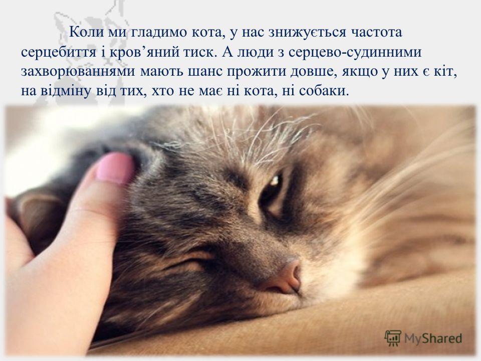 Коли ми гладимо кота, у нас знижується частота серцебиття і кровяной тиск. А люди з серцево-судинними захворюваннями мають шанс прожить довше, якщо у них є кіт, на відміну від тих, хто не має ні кота, ні собаки.