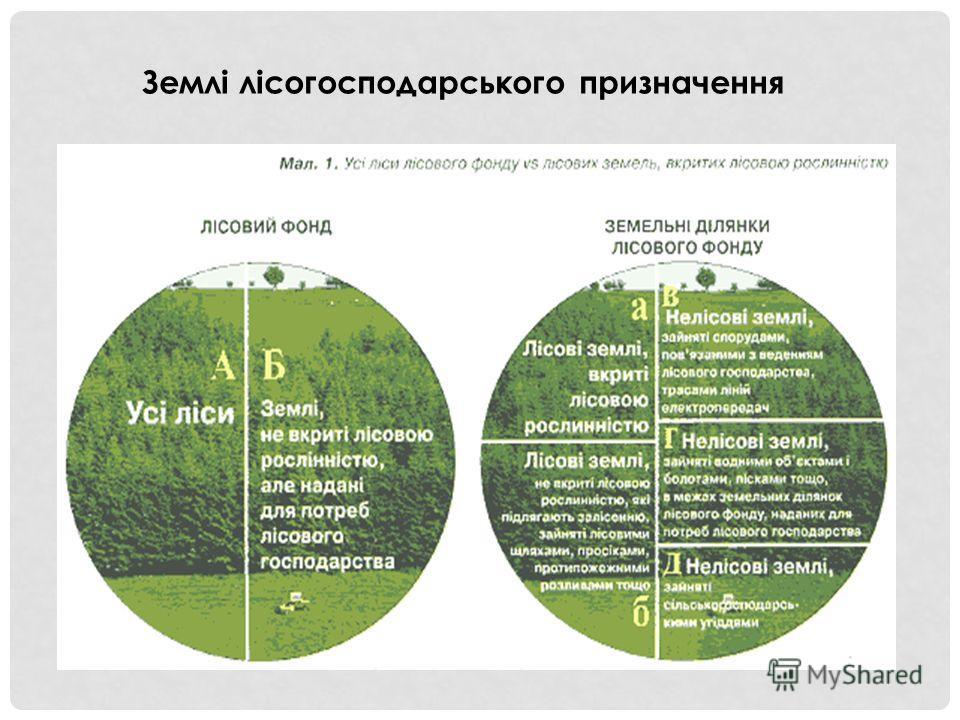 Землі лісогосподарського призначення