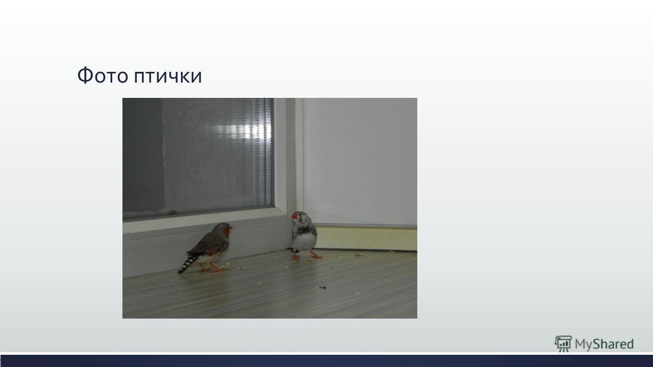 Фото птички