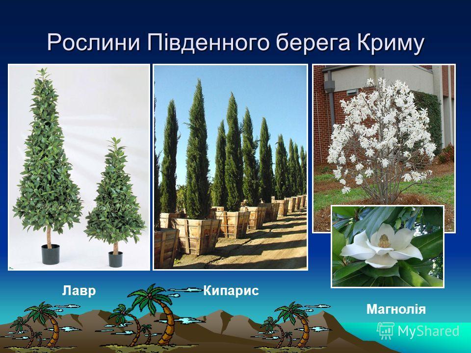 Рослини Південного берега Криму Лавр Кипарис Магнолія