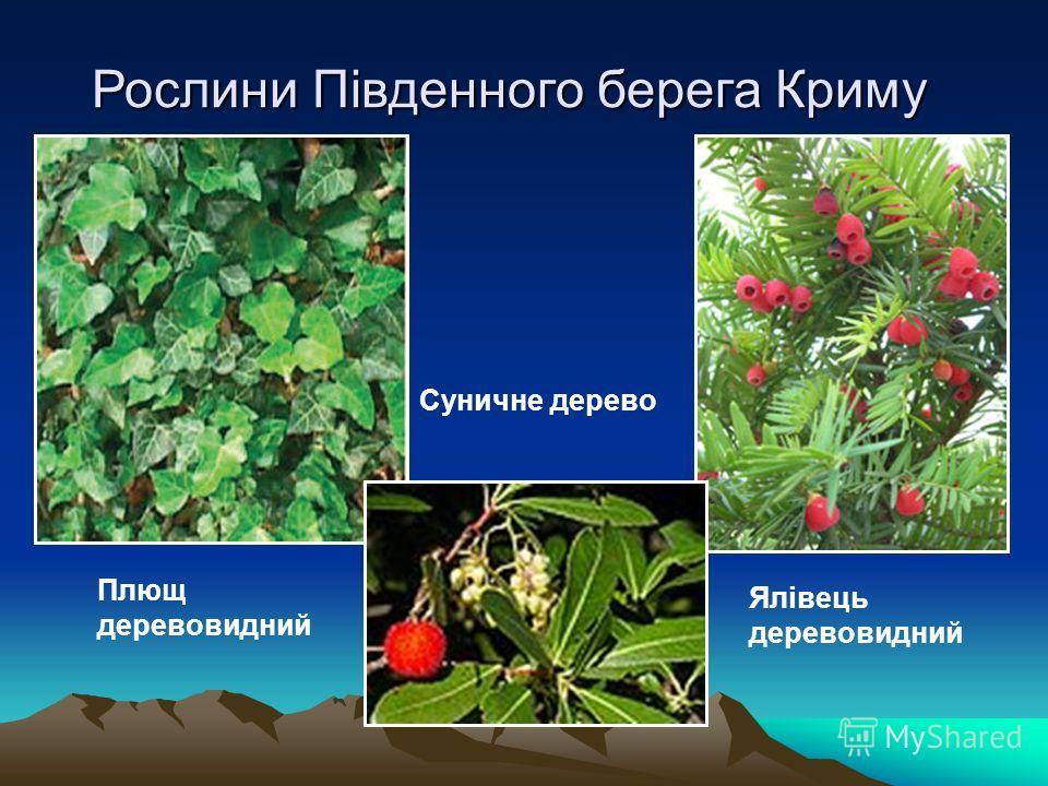 Рослини Південного берега Криму Плющ древовидный Ялівець древовидный Суничне дерево