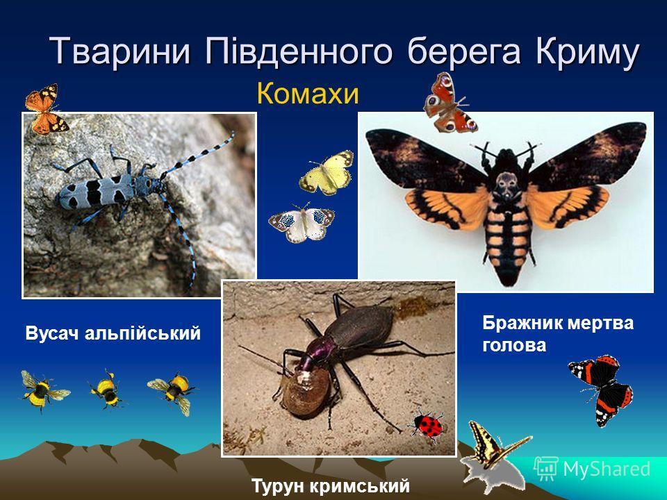 Тварини Південного берега Криму Комахи Вусач альпійський Турун кримський Бражник мертва голова