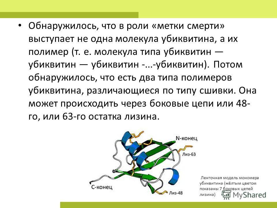 Обнаружилось, что в роли «метки смерти» выступает не одна молекула убиквитина, а их полимер (т. е. молекула типа убиквитин убиквитин убиквитин -...-убиквитин). Потом обнаружилось, что есть два типа полимеров убиквитина, различающиеся по типу сшивки.