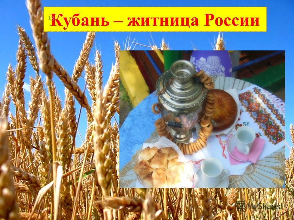 Кубань – житница России 13