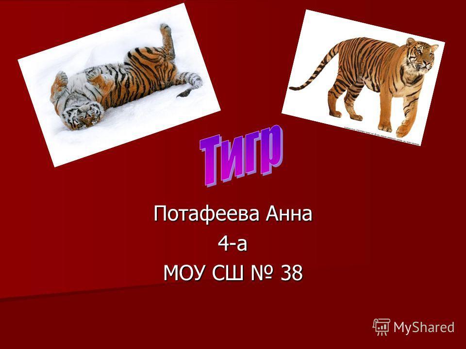 Потафеева Анна 4-а МОУ СШ 38
