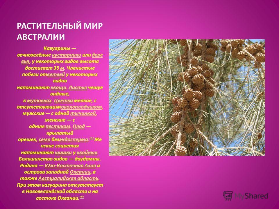 Казуарины вечнозелёные кустарники или деревья, у некоторых видов высота достигает 35 м. Членистые побеги от ветвей у некоторых видов напоминают хвощи. Листья чешуе видные, в мутовках. Цветки мелкие, с отсутствующимоколоплодником, мужские с одной тычи