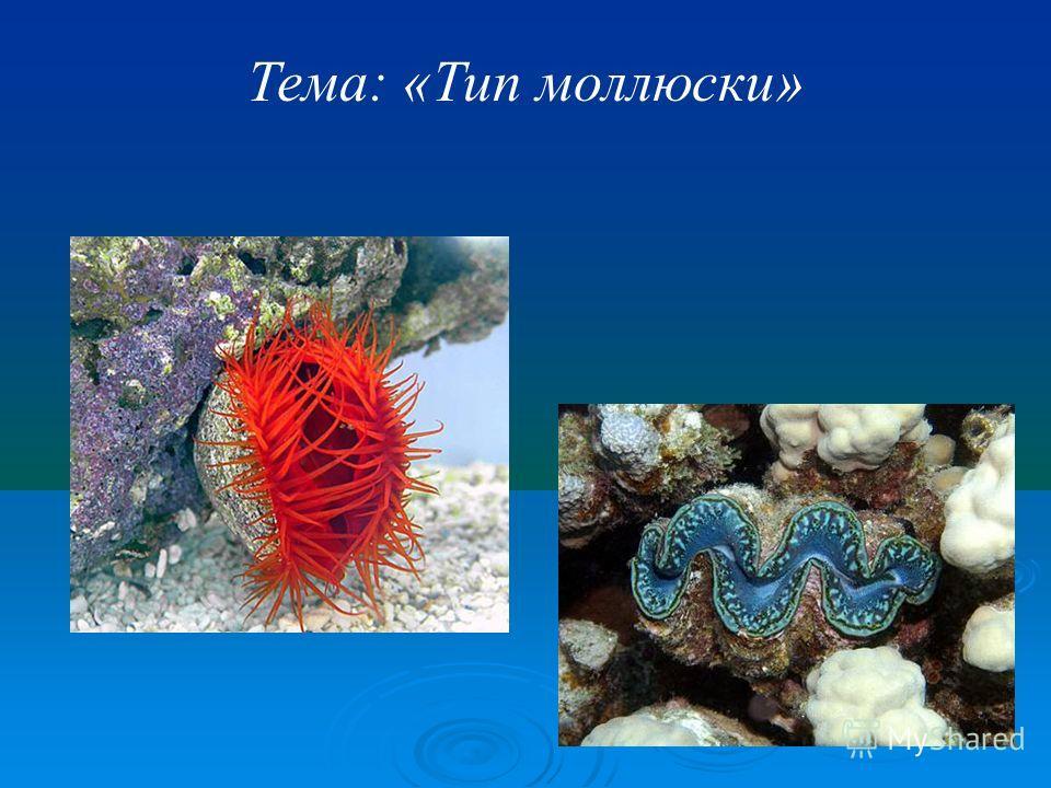 Тема: «Тип моллюски»