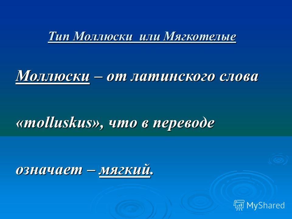 Тип Моллюски или Мягкотелые Моллюски – от латинского слова «molluskus», что в переводе означает – мягкий.