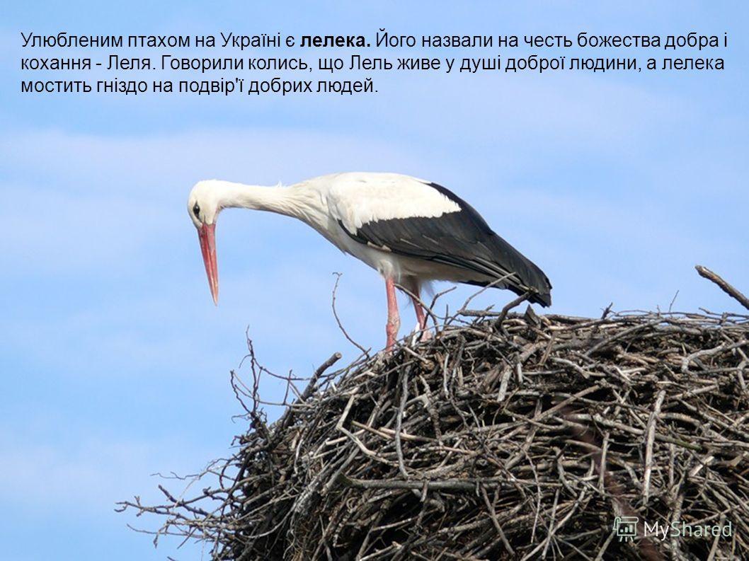 Улюбленим птахам на Україні є лелика. Його назвали на честь божества добра і кохання - Леля. Говорили колись, що Лель живе у душі доброї людини, а лелика мостить гніздо на подвір'ї добрых людей.