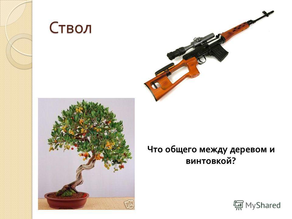 Ствол Что общего между деревом и винтовкой ?