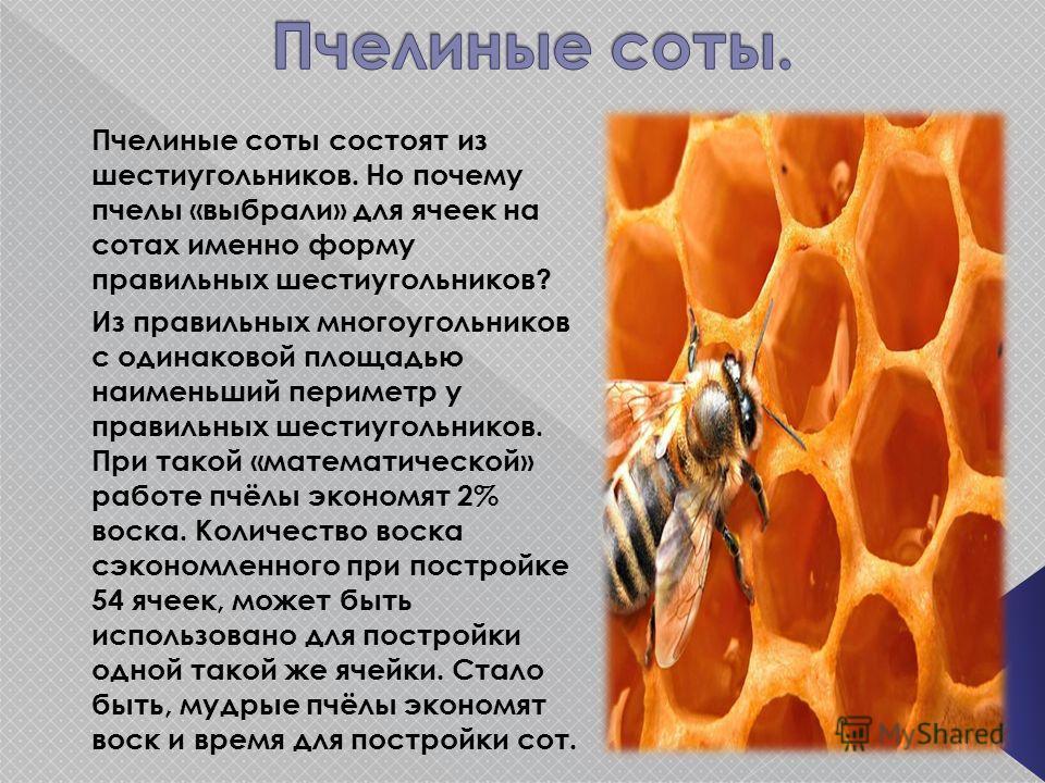 Пчелиные соты состоят из шестиугольников. Но почему пчелы «выбрали» для ячеек на сотах именно форму правильных шестиугольников? Из правильных многоугольников с одинаковой площадью наименьший периметр у правильных шестиугольников. При такой «математич