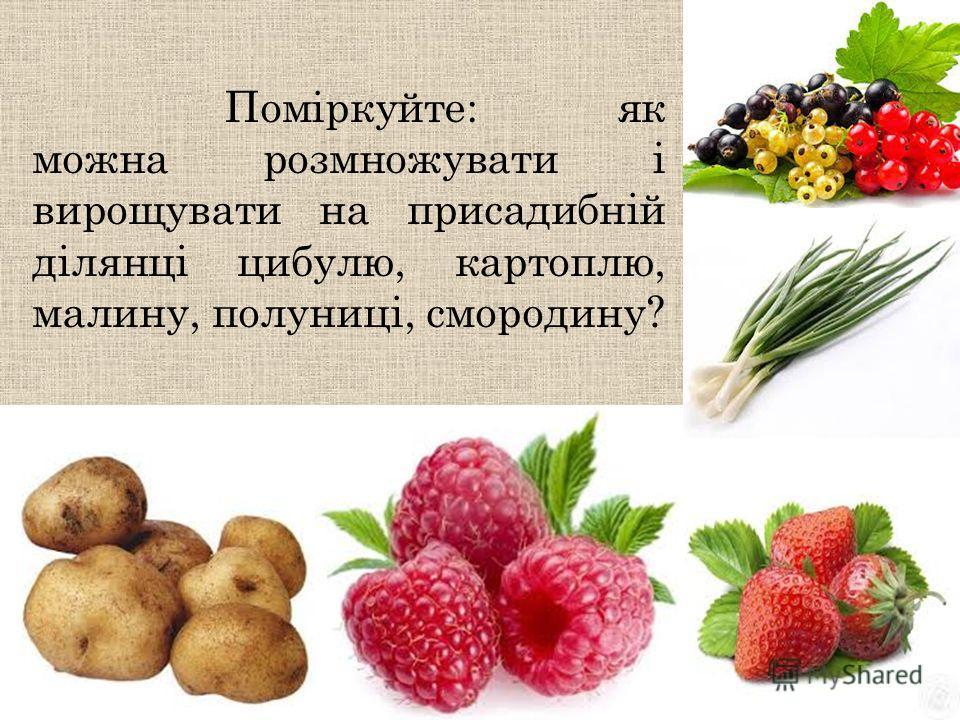 Поміркуйте: як можно розмножувати і вирощувати на присадибній ділянці цибулю, картоплю, малину, полуниці, смородину?