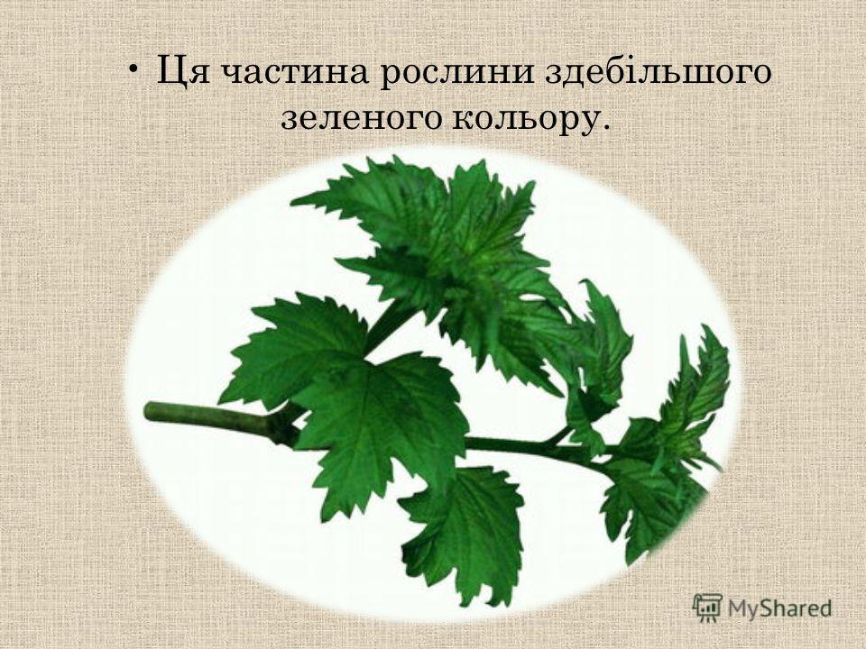Ця частина рослини здебільшого зеленого кольору.