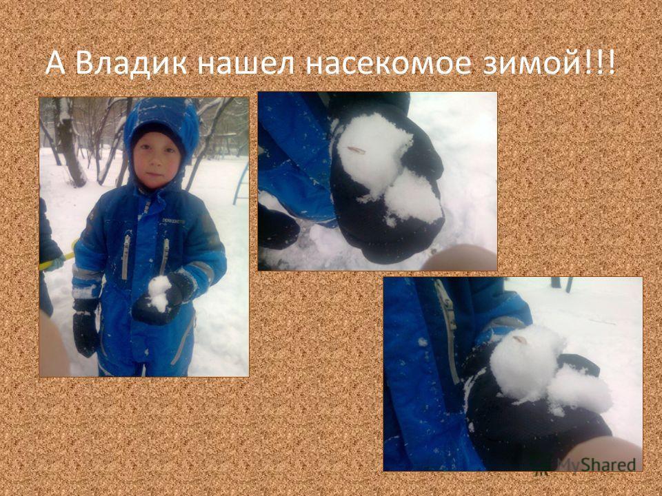 А Владик нашел насекомое зимой!!!