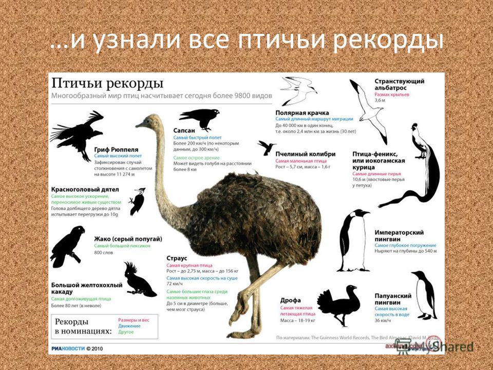 …и узнали все птичьи рекорды
