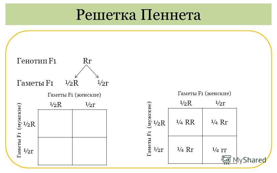 Генотип F1 Rr Гаметы F1 ½R ½r Решетка Пеннета Гаметы F1 (мужские) Гаметы F1 (женские) ½R ½r Гаметы F1 (мужские) Гаметы F1 (женские) ¼ RR¼ Rr ¼ rr ½R ½r