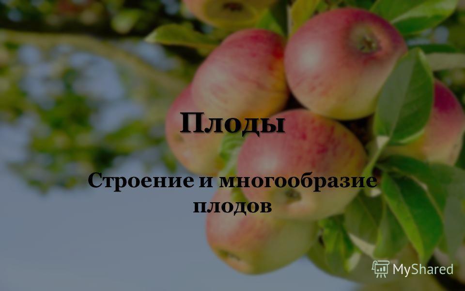Плоды Строение и многообразие плодов