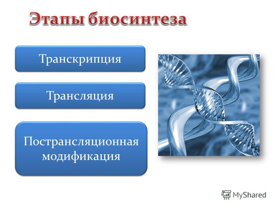 Транскриопция Трансляция Пострансляционная модификация