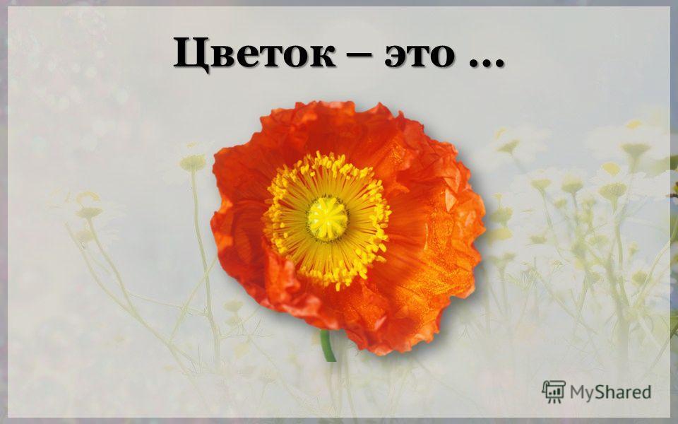 Цветок – это …