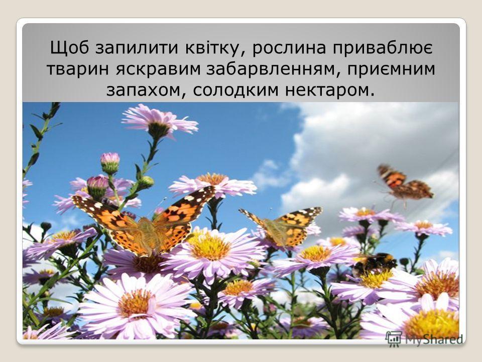 Щоб запилите квітку, рослина приваблює тварин яскравим забарвленням, приємним запахом, солодким нектаром.