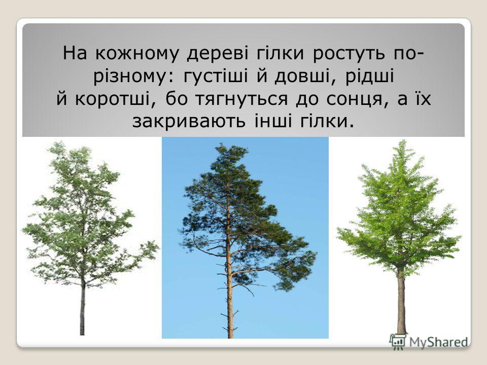На кожному дереві гілки ростуть по- різному: густіші й довші, рідші й коротші, по тягнуться до сонця, а їх закривають інші гілки.